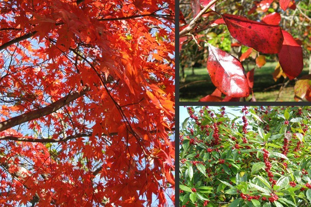 stunning reds found in leaves and fruits