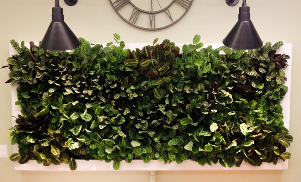 Our Office Living Wall!