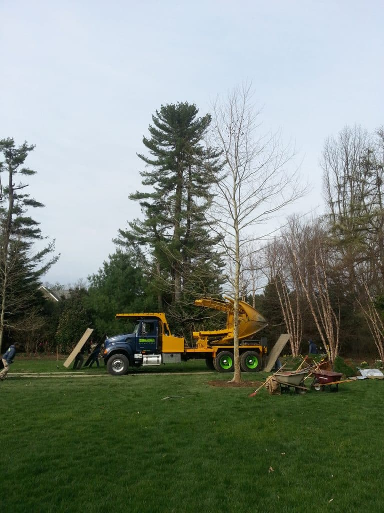 Big Trees = Big Machines!